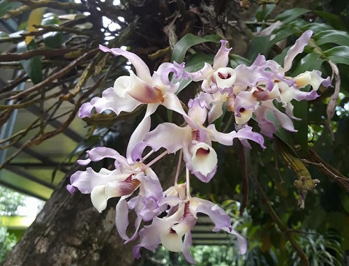 Vẻ đẹp đa dạng của loài hoa Lan